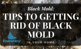 Black Mold: Tips to Getting Rid of Black Mold in Your Home