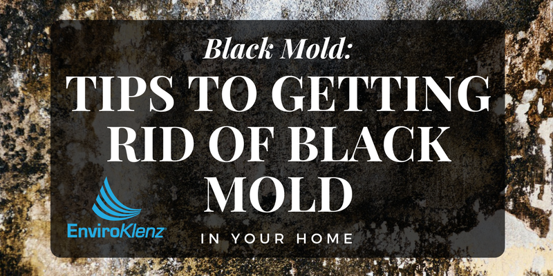 how to get rid of black mold in your home