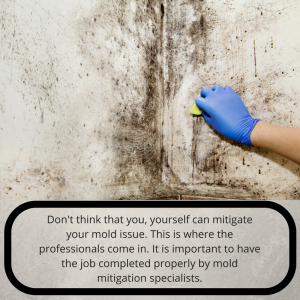 Getting rid of black mold