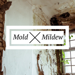 Mold vs Black Mold
