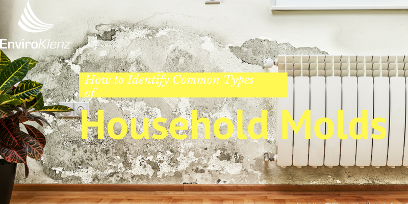 How To Identify Common Types Of Household Molds
