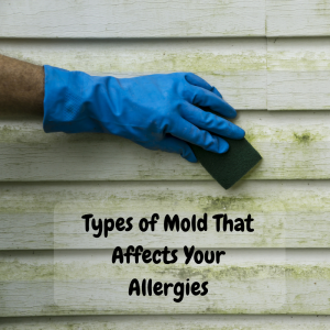 Types of Mold That Affects Your Allergies