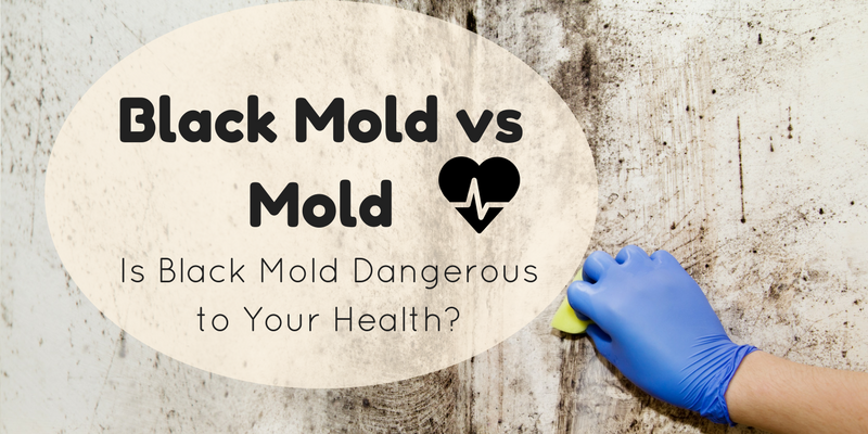 Black Mold Vs Is Dangerous To Your Health Enviroklenz