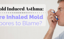 Mold Induced Asthma_ Are Inhaled Mold Spores to Blame?