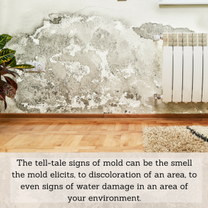 How to detect mold
