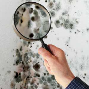 Toxic mold syndrome