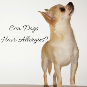 Can Dogs Have Allergies