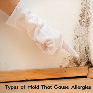 Types of Mold That Cause Allergies