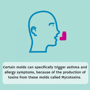 Is Asthma a Disease Caused by Mold?