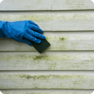 Eliminate Mold From Home