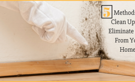 Methods to Clean Up and Eliminate Mold From Your Home