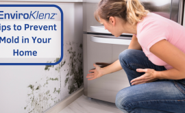 Tips to Prevent Mold in Your Home