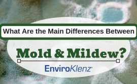 What Are the Main Differences Between Mold and Mildew