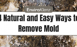 4 Natural and Easy Ways to Remove Mold