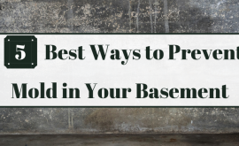Best Ways to Prevent Mold in Your Basement