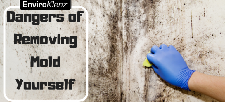 Dangers of Removing Mold Yourself