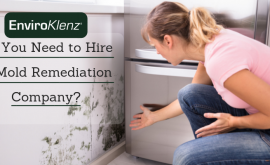 Do You Need to Hire A Mold Remediation Company