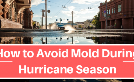 How to Avoid Mold During Hurricane Season
