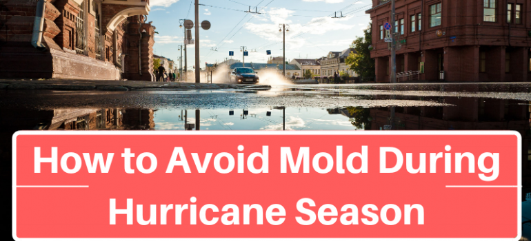 How to Avoid Mold During Hurricane Season