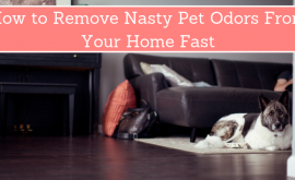 How to Remove Nasty Pet Odors From Your Home Fast
