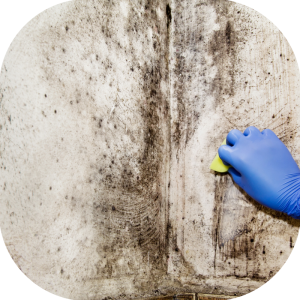 What is the amount of mold in your home
