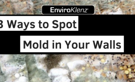 3 Ways to Spot Mold in Your Walls