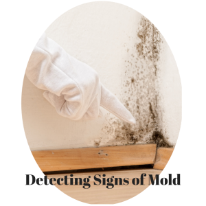 Detecting Signs of Mold