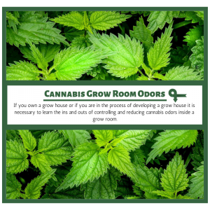Odor Control Solutions for Indoor Cannabis Grow Rooms