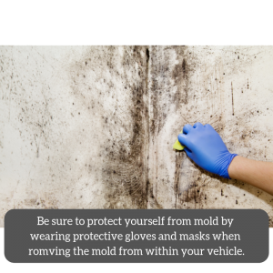 Mold in car making me sick