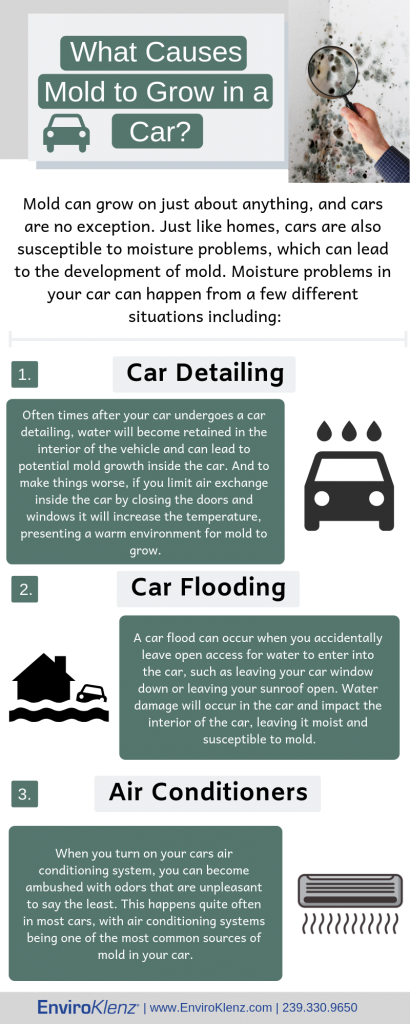 What Causes Mold to Grow in a Car