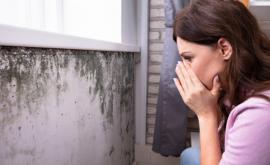 Is Black Mold Dangerous Indoors