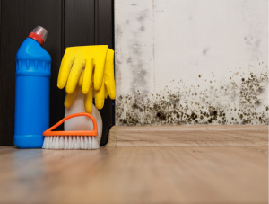 How to Find Black Mold in Your Home