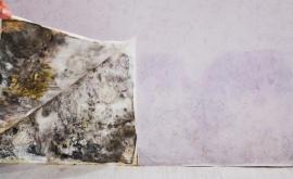 Black Mold vs Toxic Black Mold