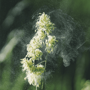 What are Seasonal Allergies
